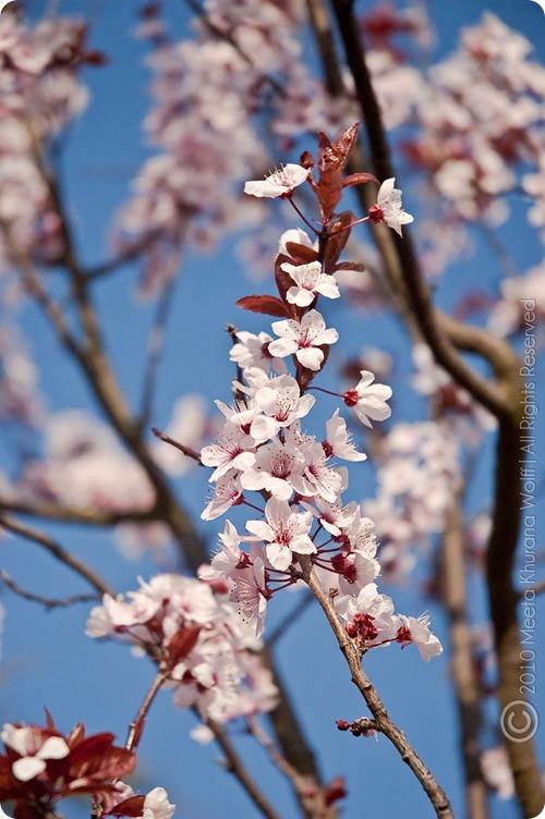 Spring2010Weimar-2CR