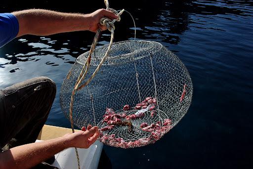 ловля рыбы на круглую сеть
