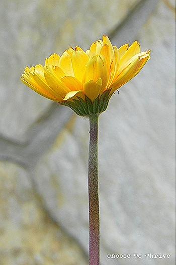 planter.13