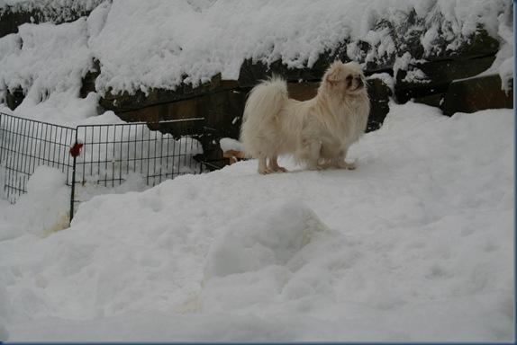 Lulle koser seg ut i snøen , des 2009