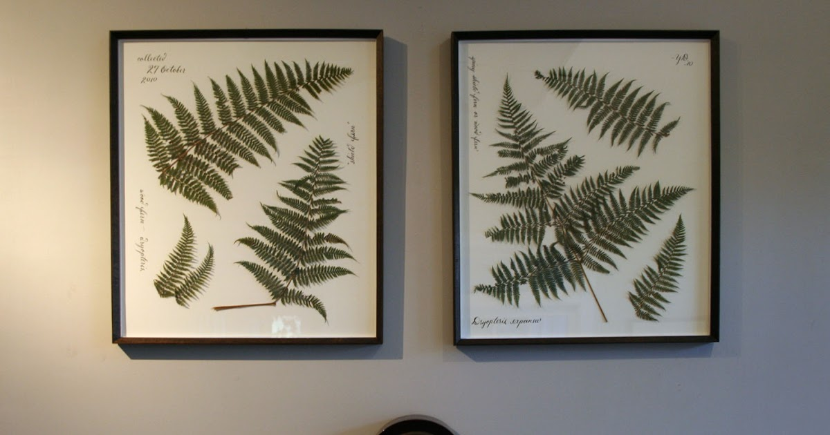pressed & framed botanicals