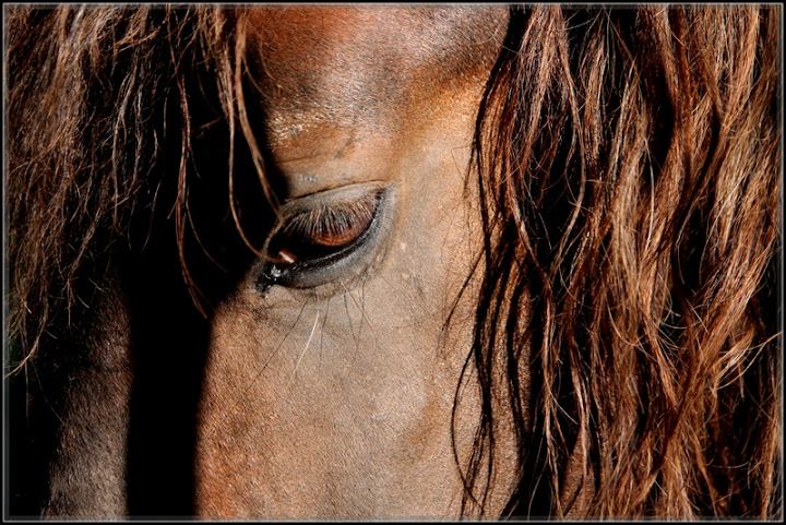 Tamron 28-75 f/2.8 ou Tamron SP 17-50 f/2.8 (new) ?! Regard_cheval