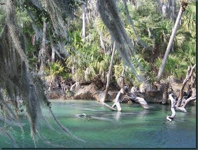 1.19.09 Blue Springs, Hoontoon Island 050