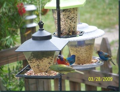birds 3.27.09 039