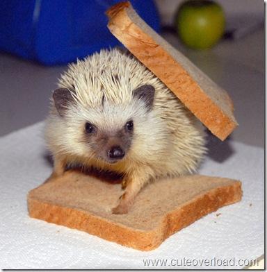 Ежико-сандвич