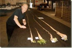 Самая длинная морковь в 5.84м
