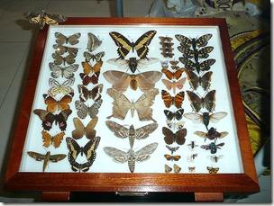 Snibston, бабочки