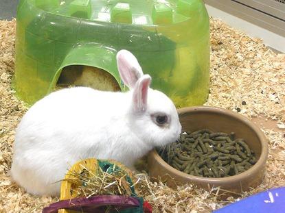Melbicks-кролик