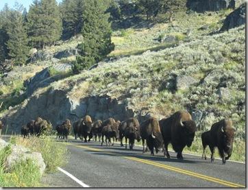 ys2 buffalo jam