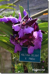 Kultana-Delight-x-pimsai