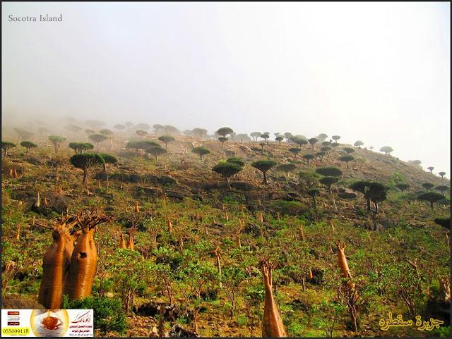 جزيرة سقطرى (تقرير شامل بمئات الصور والمعلومات )