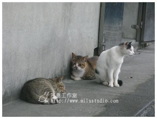 20100621-cats-52.jpg