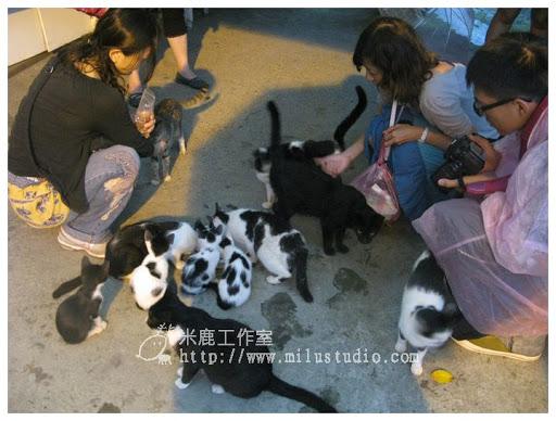 20100621-cats-42.jpg
