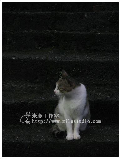 20100621-cats-43.jpg