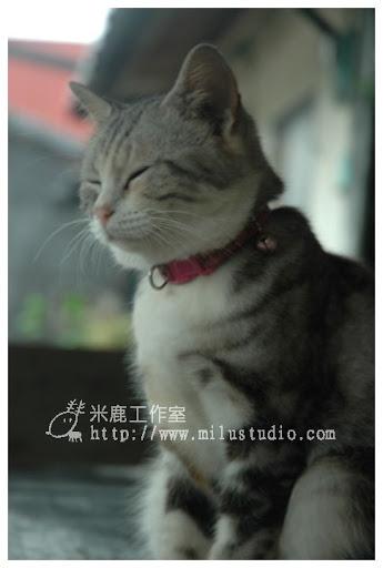 20100621-cats-15.jpg