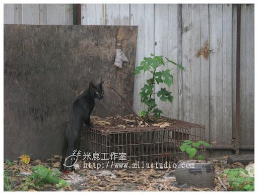 2010-cat01-09.jpg