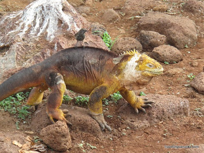 dinosaurs essays 20 different questions about dinosaurs - evenly divided into 'a and 'b' handouts   essay to answer this question: should scientists try to clone dinosaurs.
