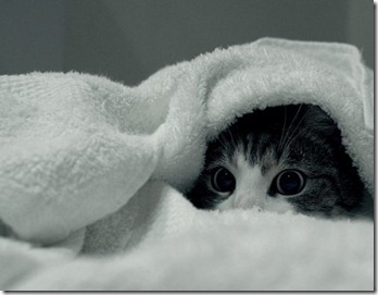 cat_towel