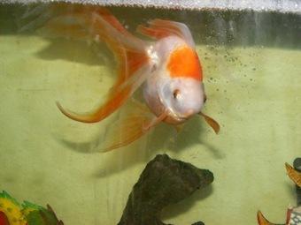 fish net 4