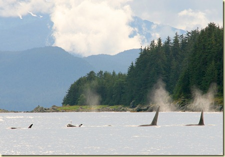 Juneau photo excursions to Auke Bay and Mendenhall Glacier (25)
