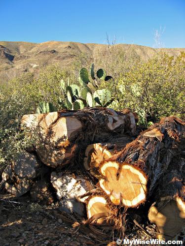 Sight of Burro Mesa from Sam Nail ranch