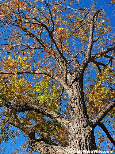 Another alien tree