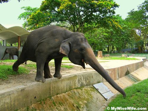 The entertaining elephant