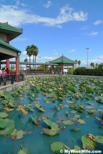 Lotus pond indicating Chinese's horticulture