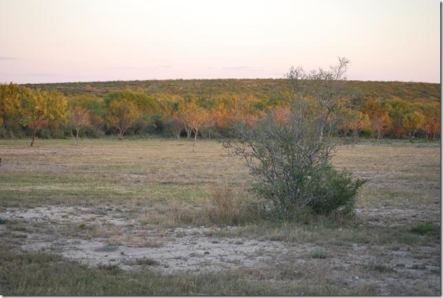 Golden pink field