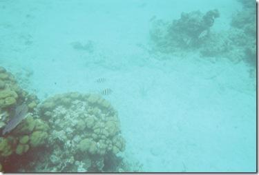 97.  Snorkeling