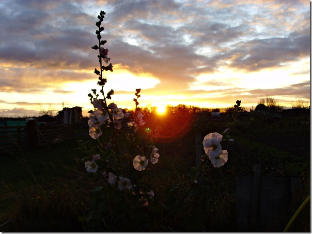 Allotment Heaven sunset