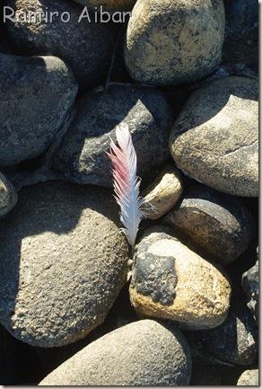 piedras y pluma de flamenco, idea original foto del Charly