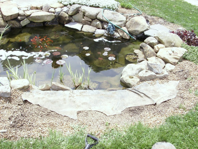 Edge of pond groundcover for Garden pond edging