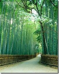 caminho-bambu-getty