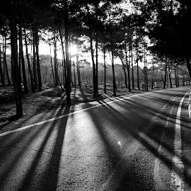 The Road by Ehsan Bazafkan - Landscapes Forests ( tehran, chitgar, park, outdoor,  )