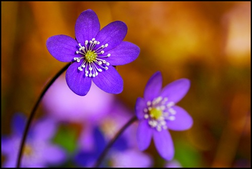 Spring_flowers_by_eswendel