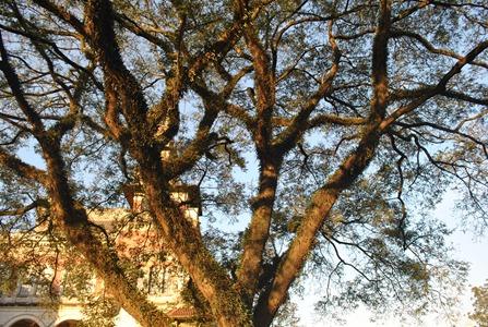 Árvore no Palácios das Indústrias - Parque Dom Pedro II. Foto: Flaviana Serafim