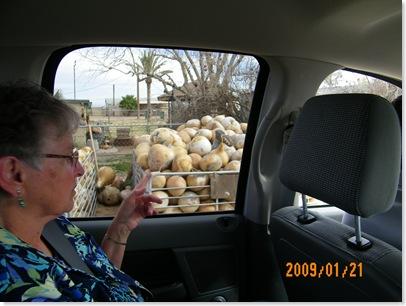 Donna loves gourding... oh, no  someone got lost in the gourd bin