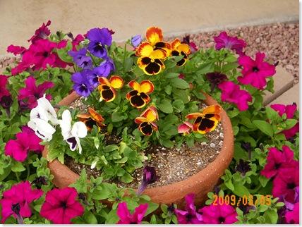 Emi's pansies and petunias