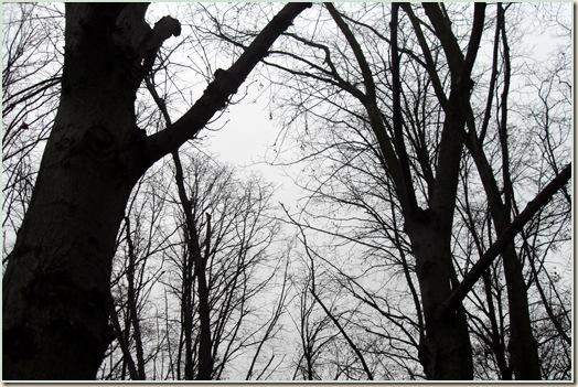 nøgne træer en novemberdag