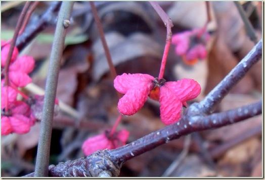 naturen november 2009
