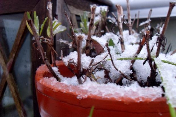 det første snefald