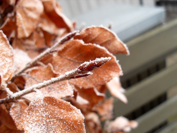frostklar mandag i januar