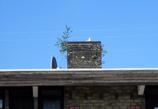 En fugl på taget