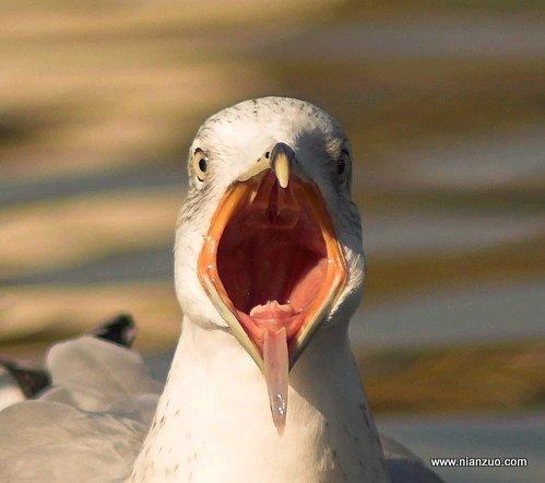 血盆大口 鸟