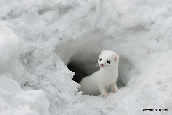 動物的快樂生活 小白