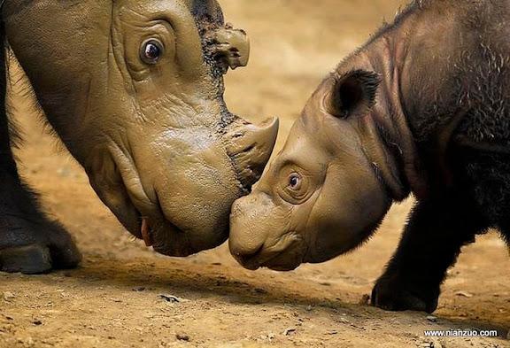 動物的快樂生活 犀牛