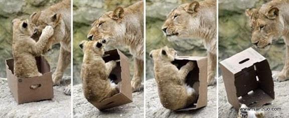 動物的快樂生活 老實點,要不摔壞了