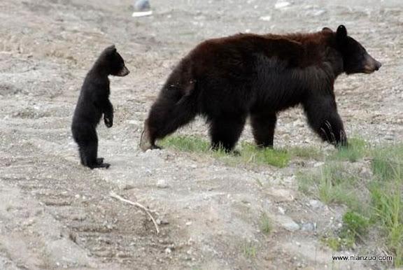 可爱的动物 妈妈,你不会吧?