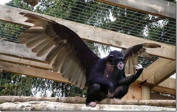 monyet-ajaib